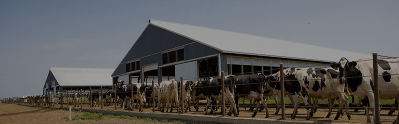 Animal husbandry, milk, dairy setup management