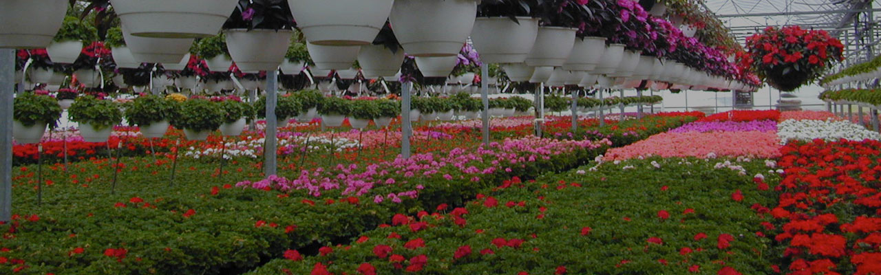 Floriculture plant cultivation techniques and management