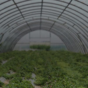 Green house and poly house cultivation management