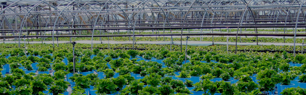 Horticulture plant cultivation techniques and management